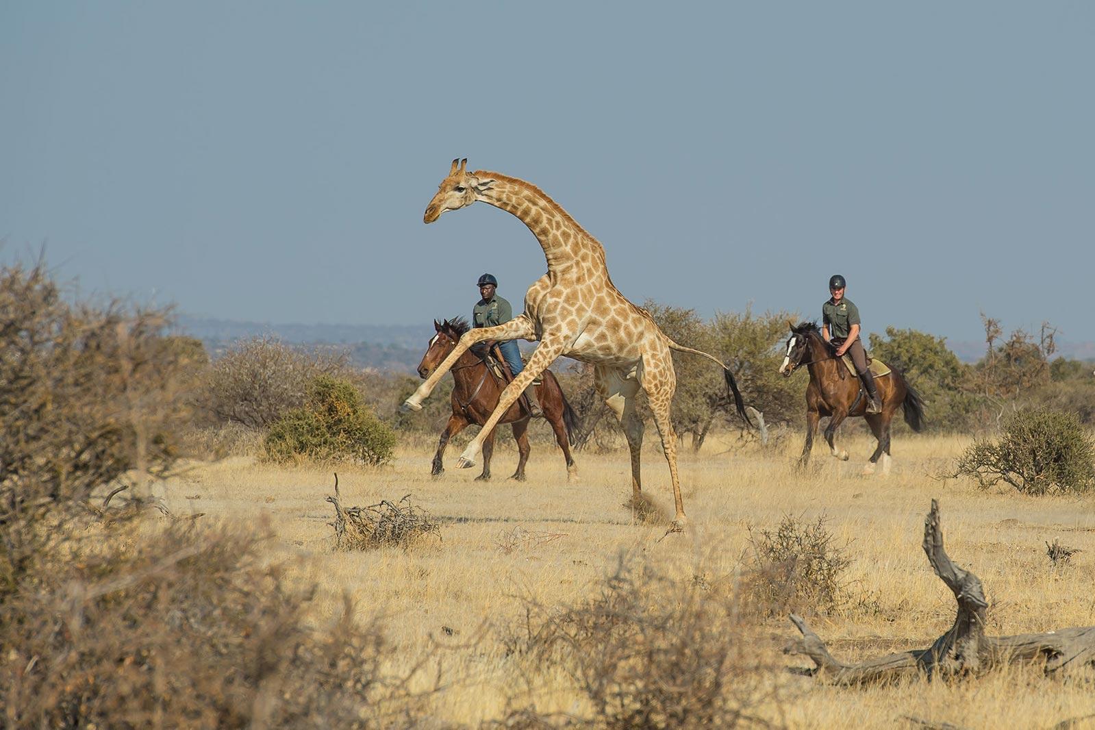 Julie Et Helene Au Botswana à Cheval.